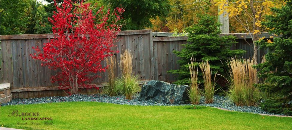 Amur Maple | B. Rocke Landscaping | Winnipeg, Manitoba